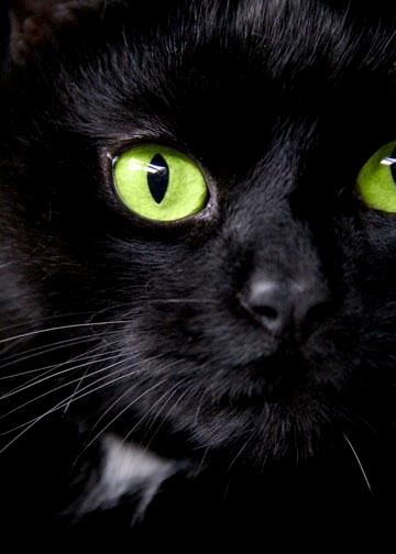 Black Cat Green Eyes Green Eyed Cat Cats Cat Greens
