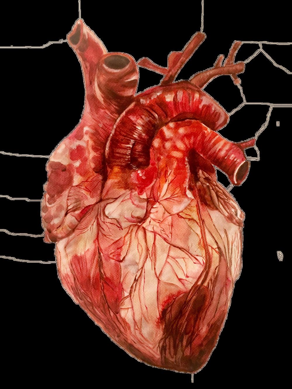 Картинки сердец настоящих