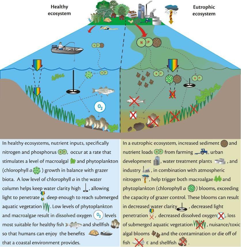 Ecosystem Diagram | aquatic ecosystem diagram | Ecosystems