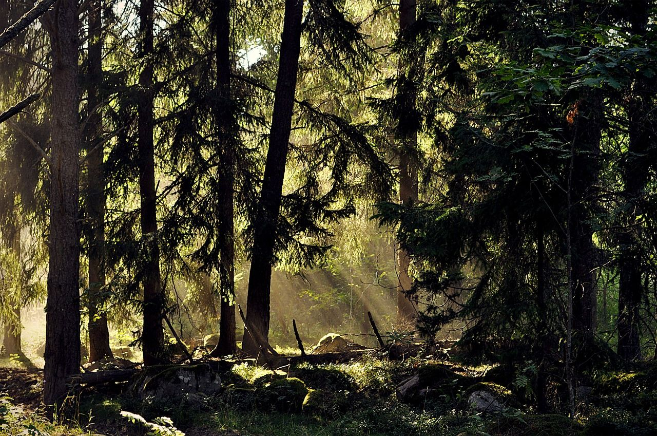 Forest Trees Forest Sweden Landscape Nature Forest Trees Forest Sweden Landscape Nature Nature Nature Beach Nature Photos