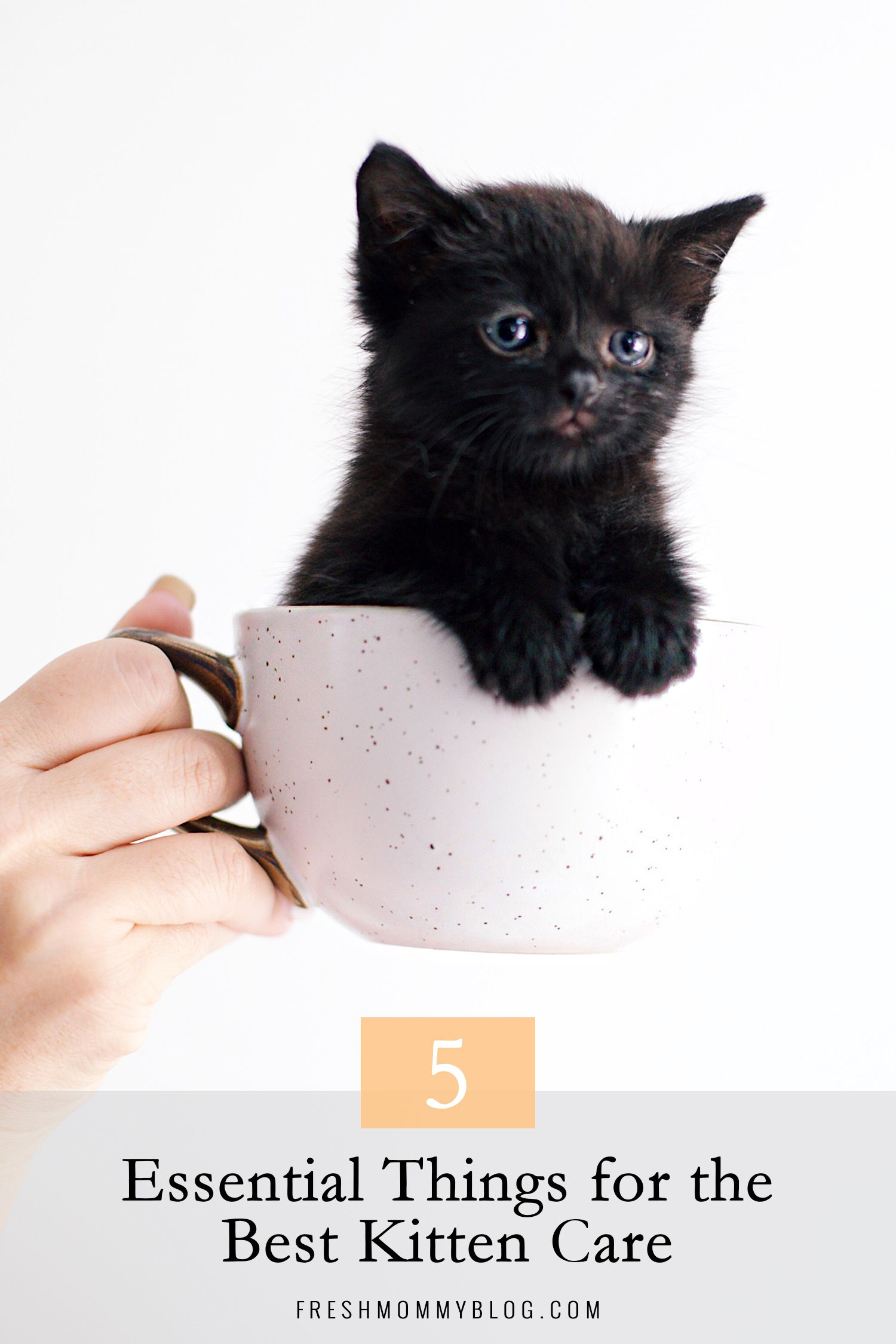 5 Essential Things For The Best Kitten Care In 2020 Kitten Care Kitten Cat Care