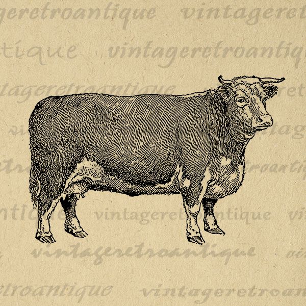 Printable Digital Hereford Cow Graphic Farm Animal Illustration Download Image Vintage Clip Art Jpg Png Eps HQ 300dpi No3502 Vintageretroantiqu