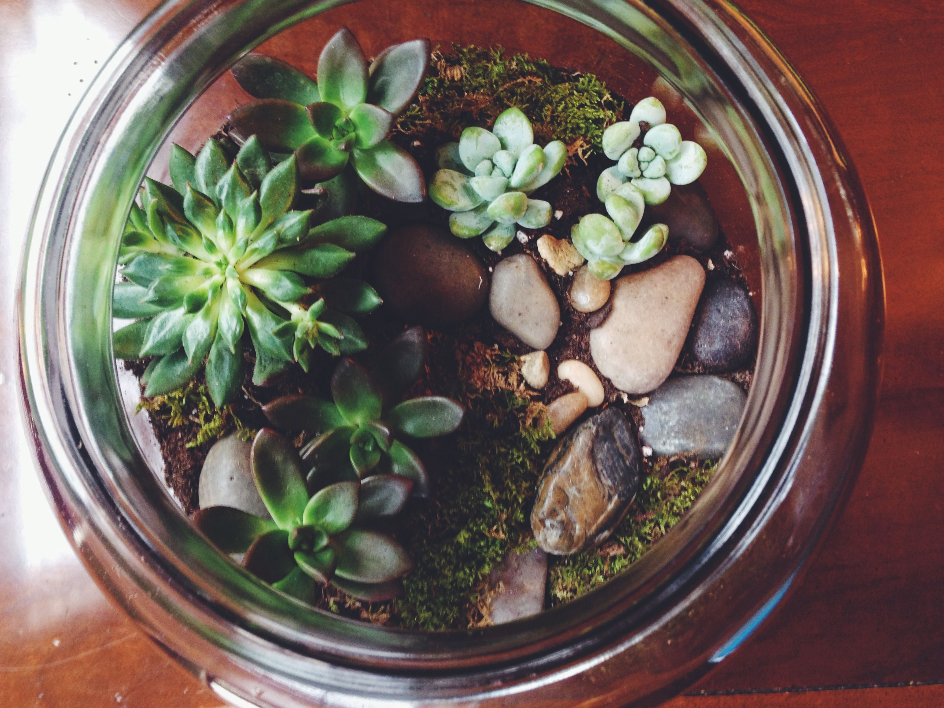 Top 28 Succulent Terrarium Bellewether Succulent