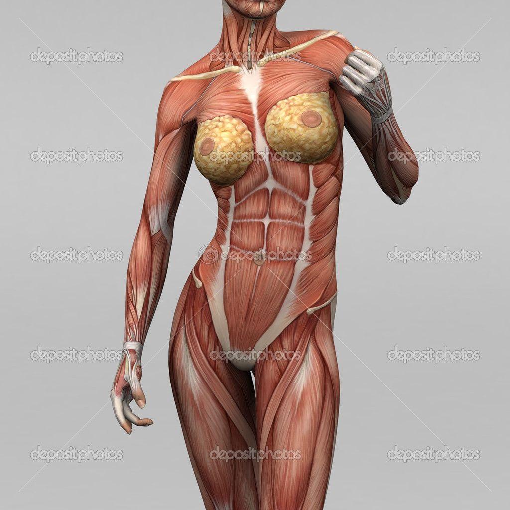 anatomia acupuntura 3d - Pesquisa Google | Acupuntura | Pinterest ...