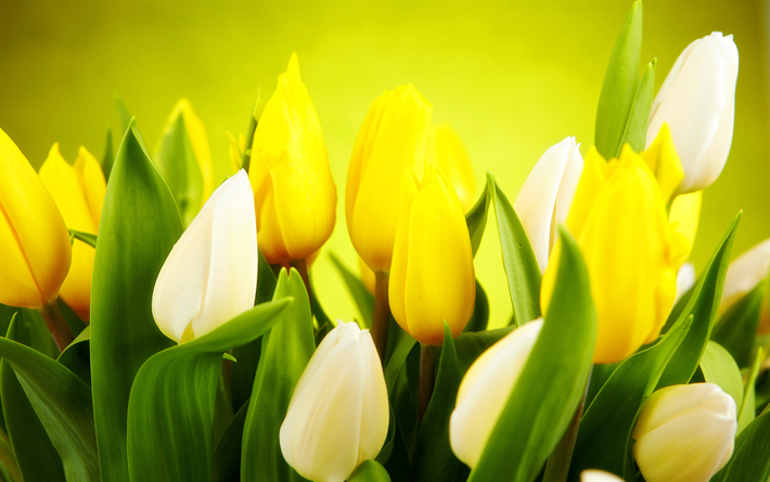Download Wallpapers Colorful Tulips 4k Spring Flowers Close Up Tulips Besthqwallpapers Com Spring Flowers Images Flower Images Wallpapers Yellow Tulips