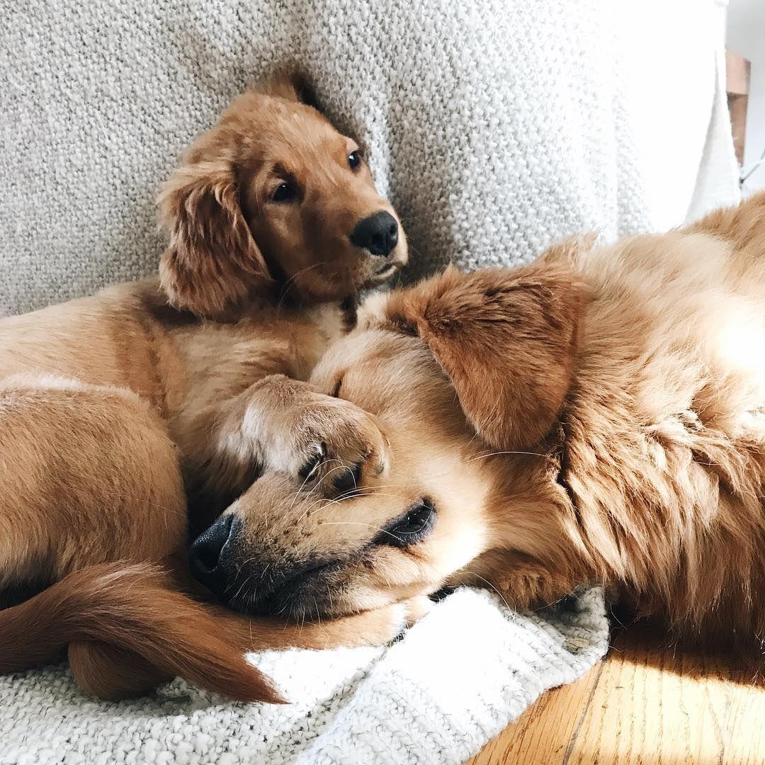 happily // Wonder pets, Cute puppies, Pets