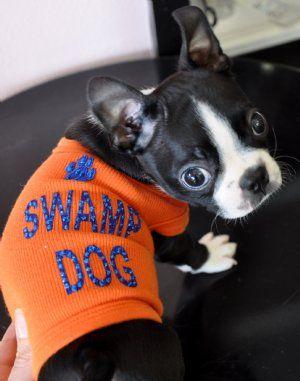 Swamp dog | orange and blue, lets go gators! | Pinterest ...