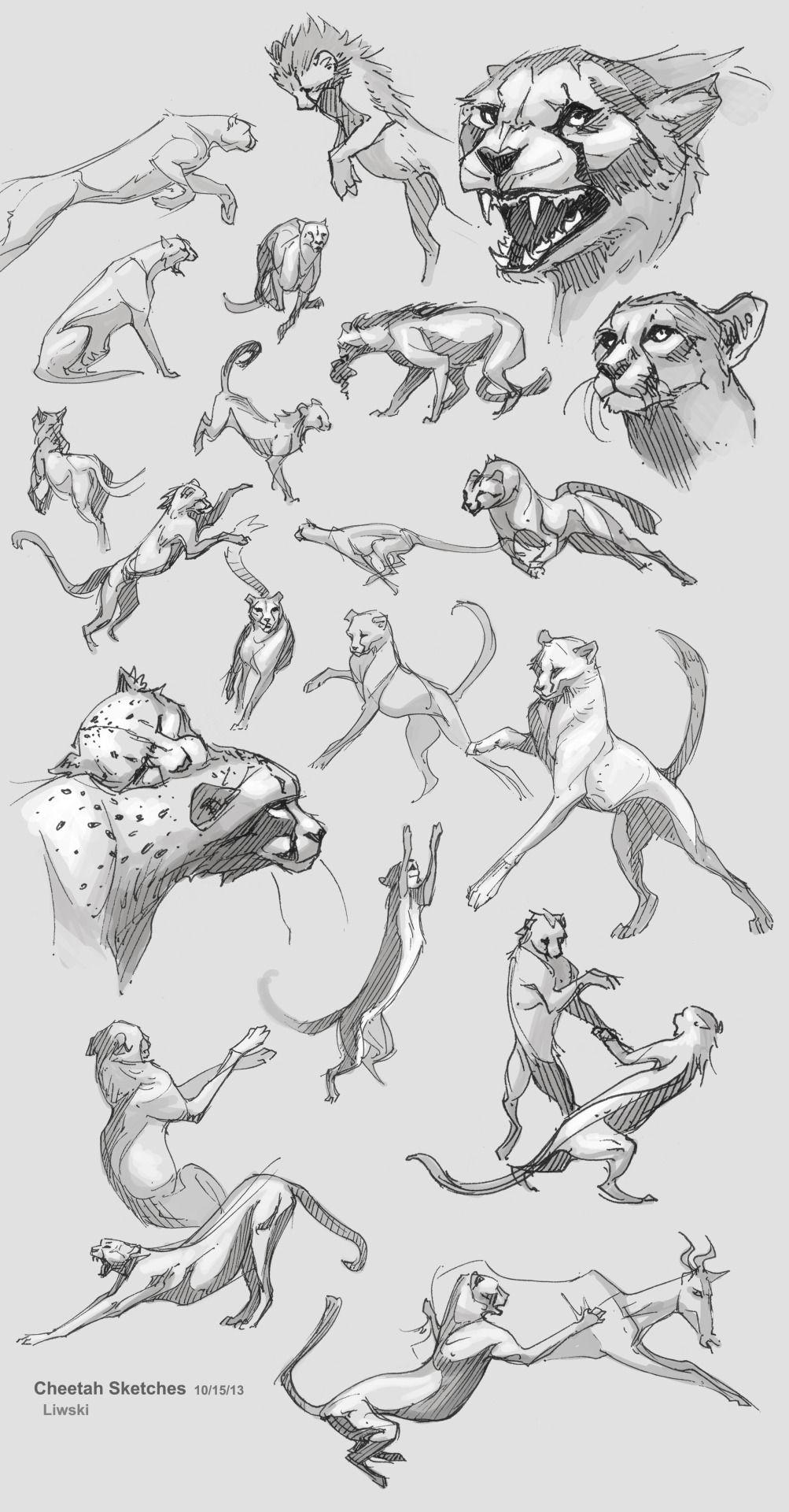 Zebrafeet\'s Art | animal art | Pinterest | Draw, Animal and Anatomy