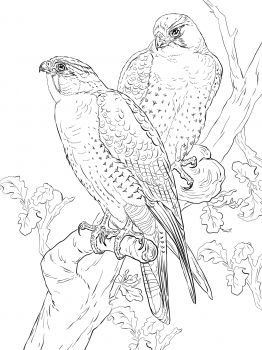 peregrine falcons coloring page from falcons category select from 28473 printable crafts of cartoons nature animals bible and many more