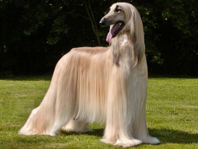 All Dogs Name Goldenacresdogs Com