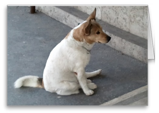 Adorable waiting dog greeting card sits here patiently for you. Tell someone you are sitting around waiting to hear from them. Design also on sweatshirts, t-shirts, and baby bibs.