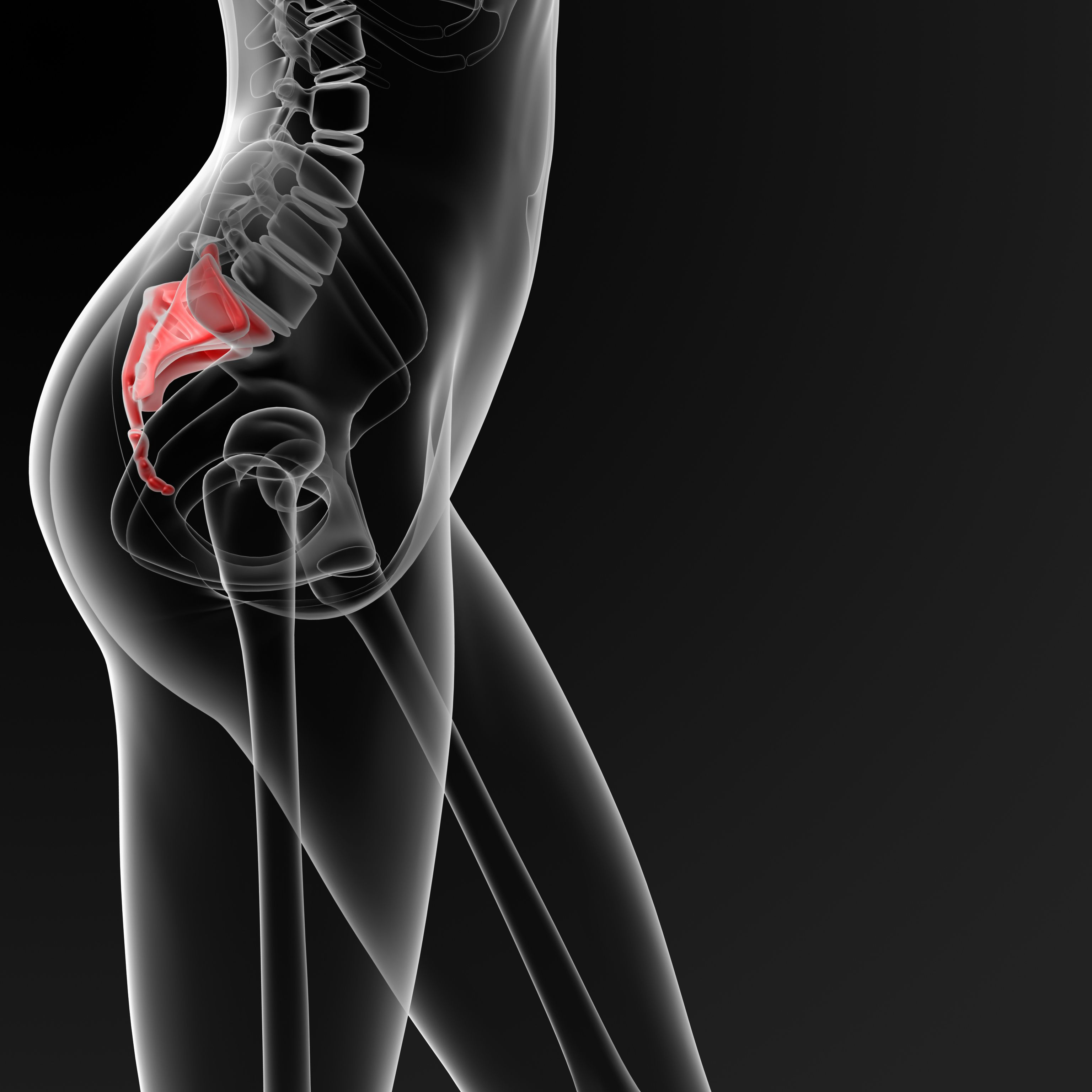 12+ Where is your tailbone trends