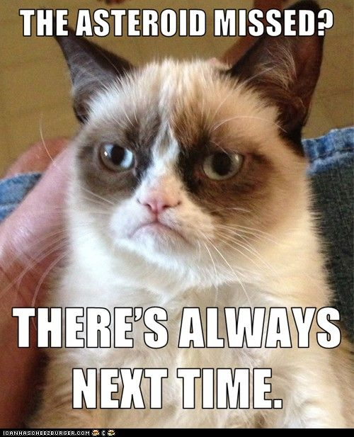 Oh grumpy cat what will we do