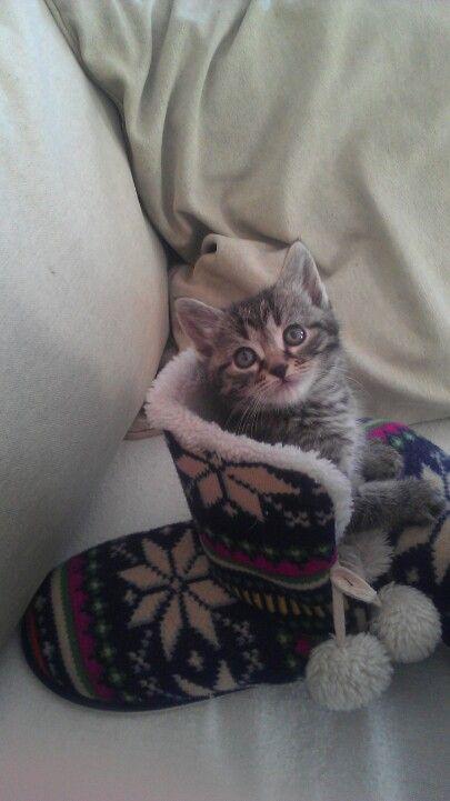 6 Week Old Grey Tiger Kitten Named Heinrich 3 Kitten Names Fur Babies Kitten