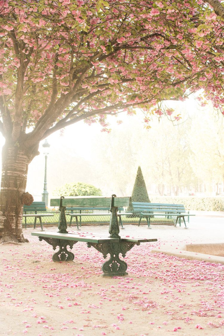 10 Places To See The Cherry Blossoms Bloom In Paris Every Day Parisian Paris Wall Art Paris Photography Cherry Blossom