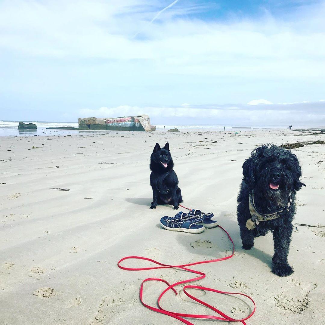 Schuhe Aus Und Die Nackten Zehen In Den Sand Graben Sommer2019 Bretagnesud Tibetterrier Schipperke Barfuss Schleppleine Hundetraining Animals Dogs