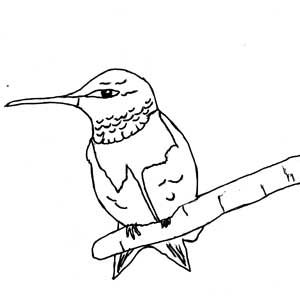 male ruby throated hummingbird perching coloring page