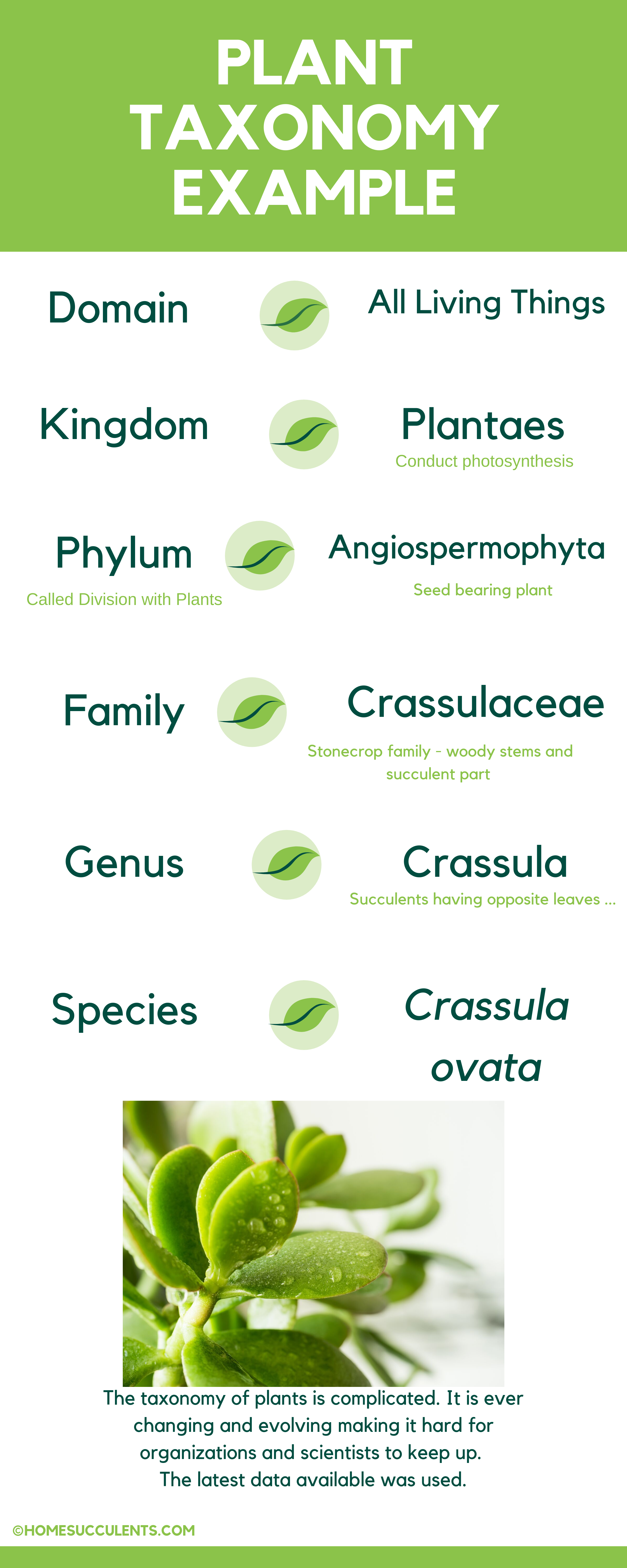 Plant Taxonomy Chart Succulents Plants Succulents In Containers Taxonomy