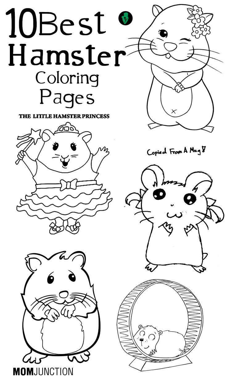 Top 25 Free printable Hamster Coloring
