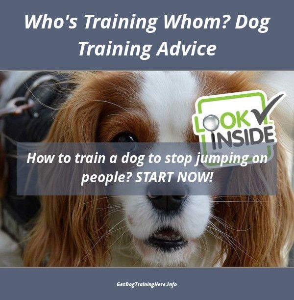 Stop Your Dog From Jumping Up Visit Our Site For Complete Dog