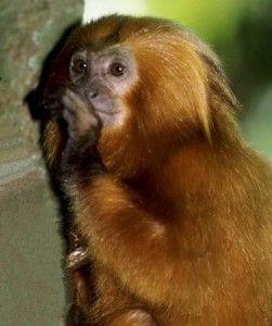 animais típicos da floresta amazônica confira3 251x300 jpg 251 300