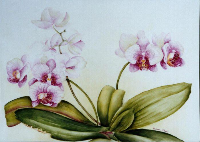 работы орхидеи картинки на бумаге ткровенно говоря, огда