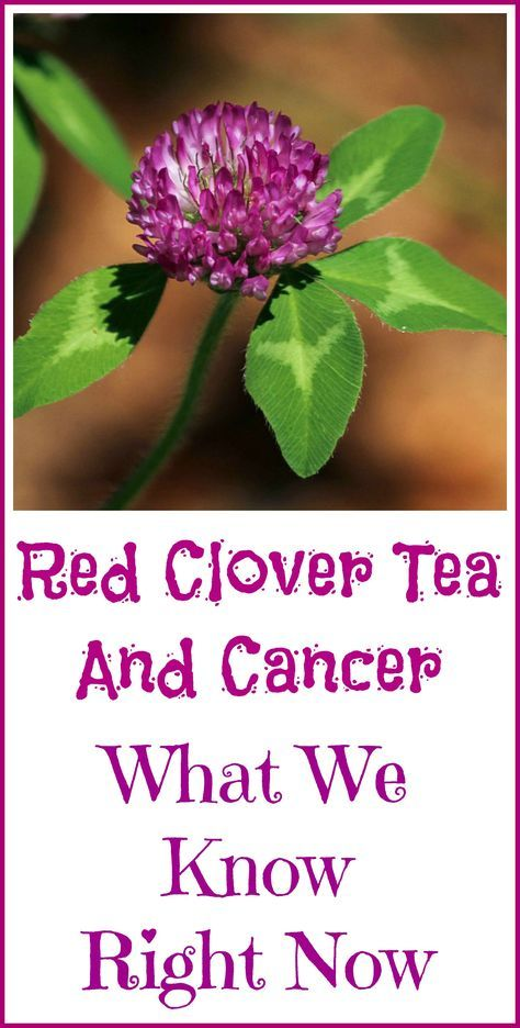 Red Clover Tea and Cancer | naturopathy | Natural cancer
