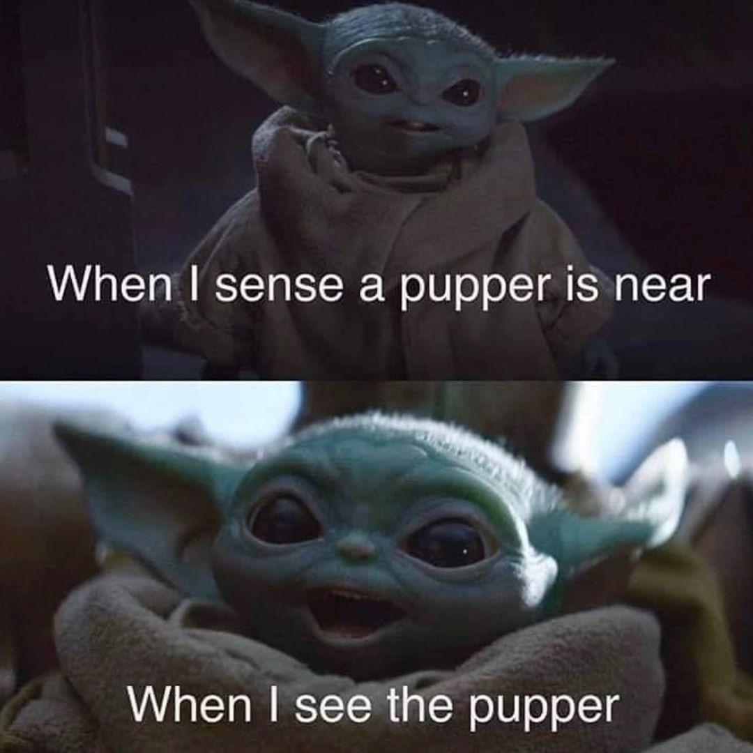 Baby Instagram Love Puppers Yoda Yoda Funny Funny Star Wars Memes Yoda Meme