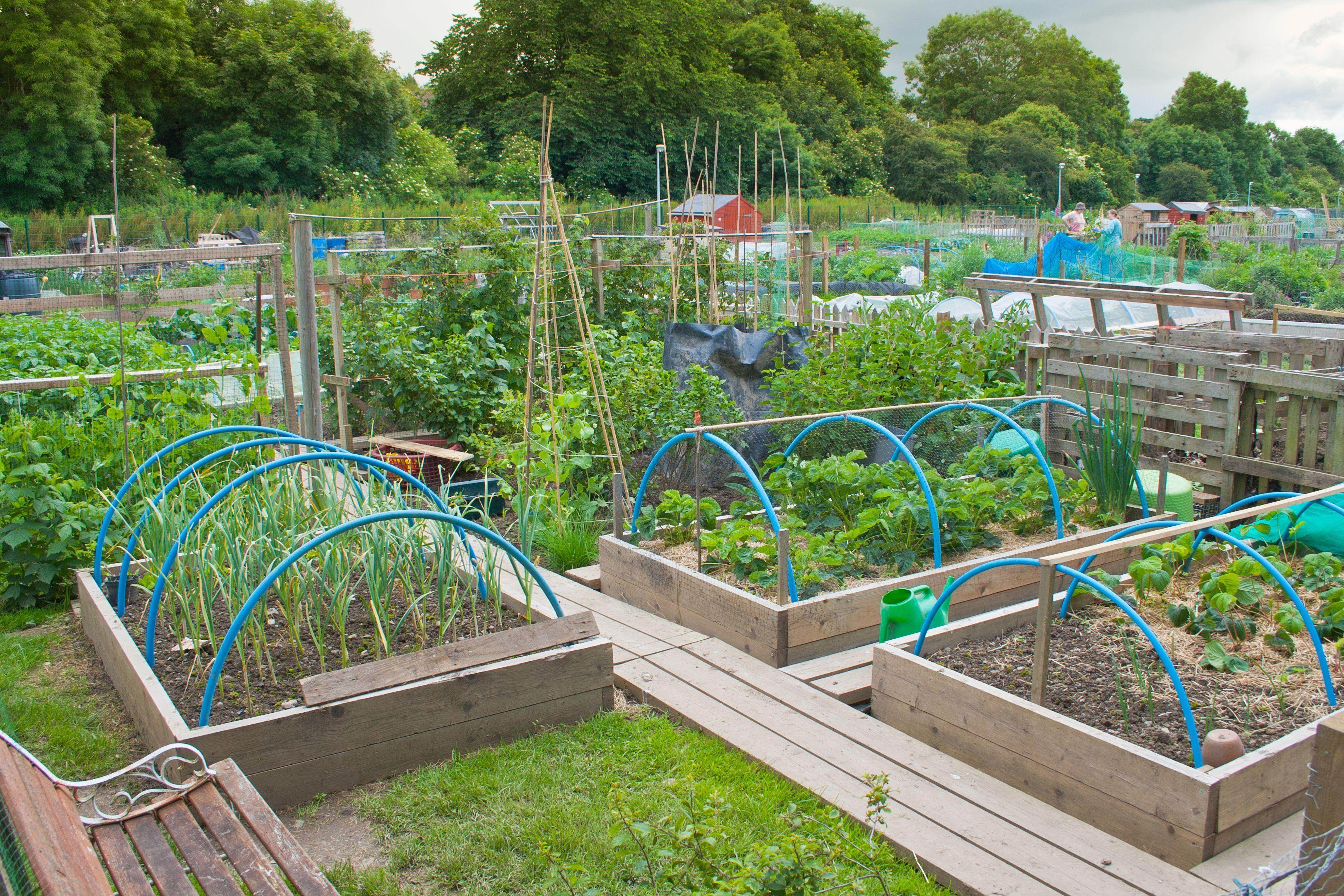 backyard vegetable garden design quality garden post | garden