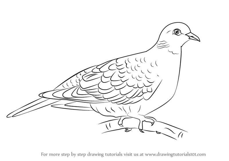 Learn How to Draw a Turtle Dove (Birds) Step by Step : Drawing ...