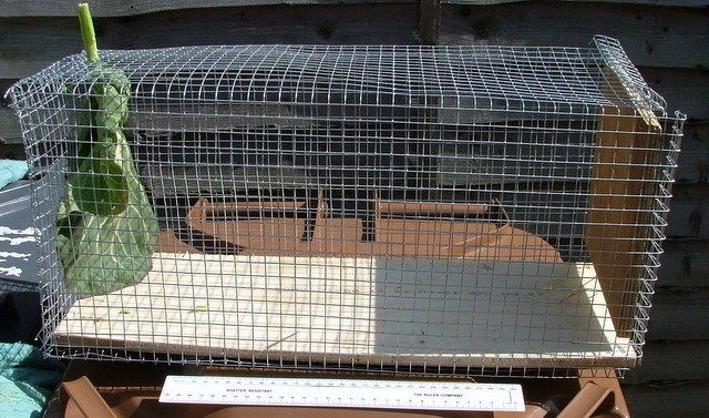 Diy Small Animal Trap Rabbit Squirrel Etc Small