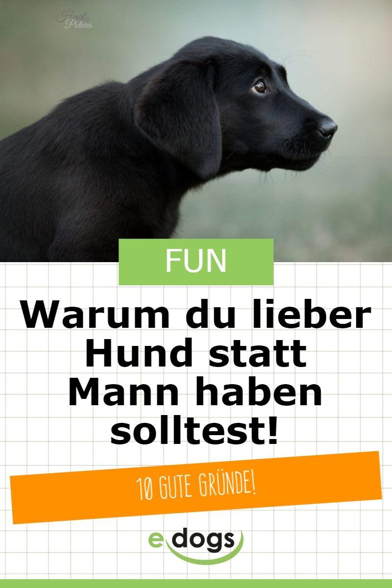 Warum Du Lieber Einen Hund Anstatt Einen Mann Brauchst Edogs Magazin Hunde Lustige Welpen Hund Witze