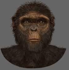 Resultado de imagen de Ardipithecus ramidus