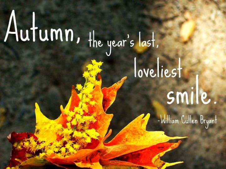 Autumn Quote Quote Nature Autumn Leaves Fall Colors Foliage Autumn Quotes