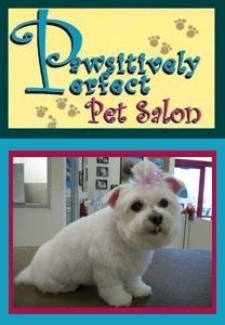 Pawsitively Perfect Pet Salon In Pittston Pa 18640 Get 20 Towards A Pawsitively Perfect Grooming For 10 At Pawsitively Perfect Pet Sal Pet Salon Pets Salons
