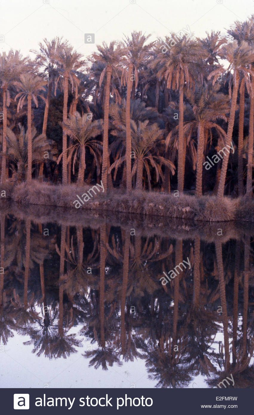 Download This Stock Image Date Palm Trees On The Banks Of The Shatt Al Arab River Formed By Tigris And Euphrates Rivers Near Palm Trees Date Palm Stock Photos
