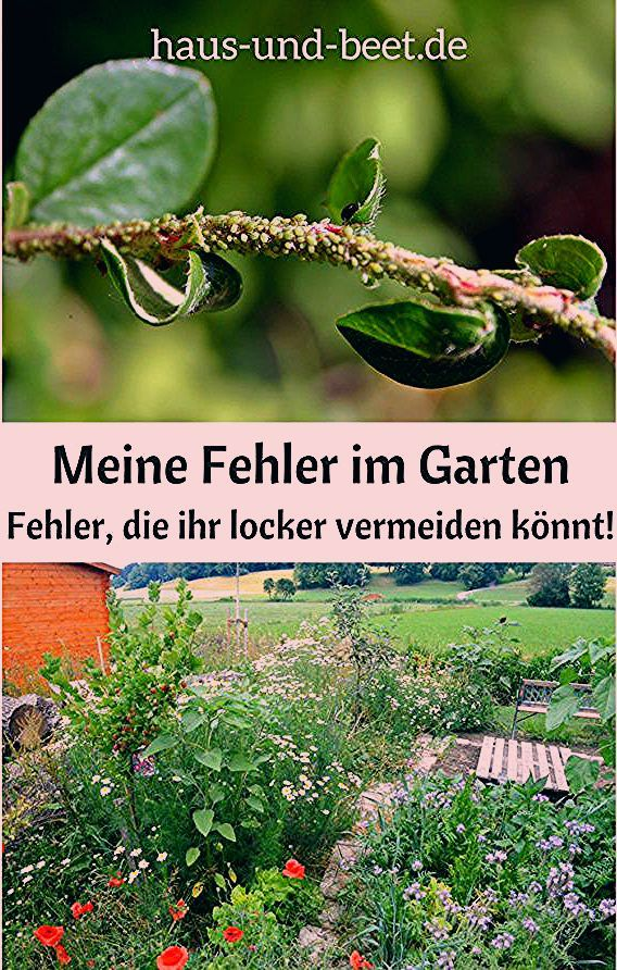 Photo of Meine Fehler im Garten – Das empfehle ich euch nicht – Haus und Beet