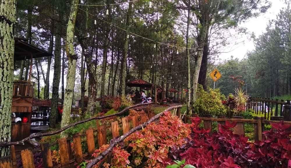 Konsep Yang Ditawarkan Memang Alam Dari Sini Kita Bisa Lihat Kota Batu Kota Malang Dari Atas Kata Manager Marketing Cafe Taman Pinus Hutan Taman Kota