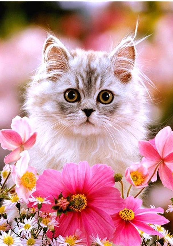 Колосьями хлебом, картинки с кошками картинки с кошками