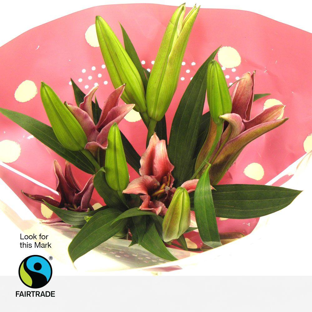 Sainsburys 6 fairtrade pinkwhite oriental lilies stunning sainsburys 6 fairtrade pinkwhite oriental lilies stunning oriental lilies available falaconquin
