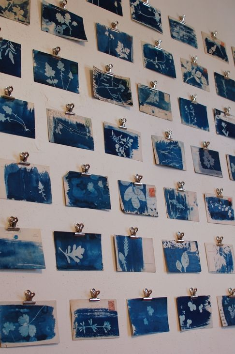 Cyanotypes of weeds on old postcards