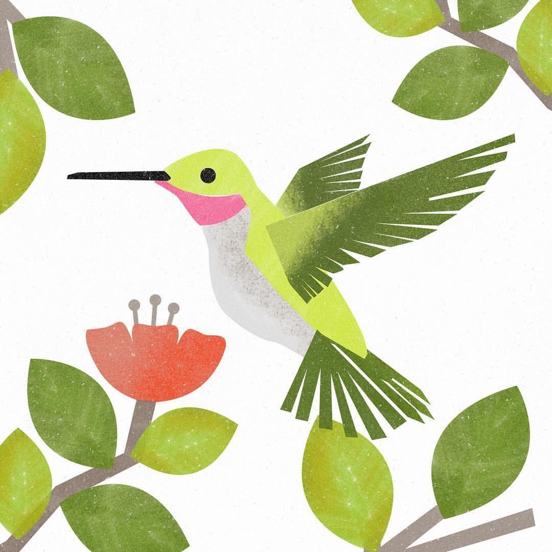 Hummingbird Hummingbird Illustration Illustrationartists