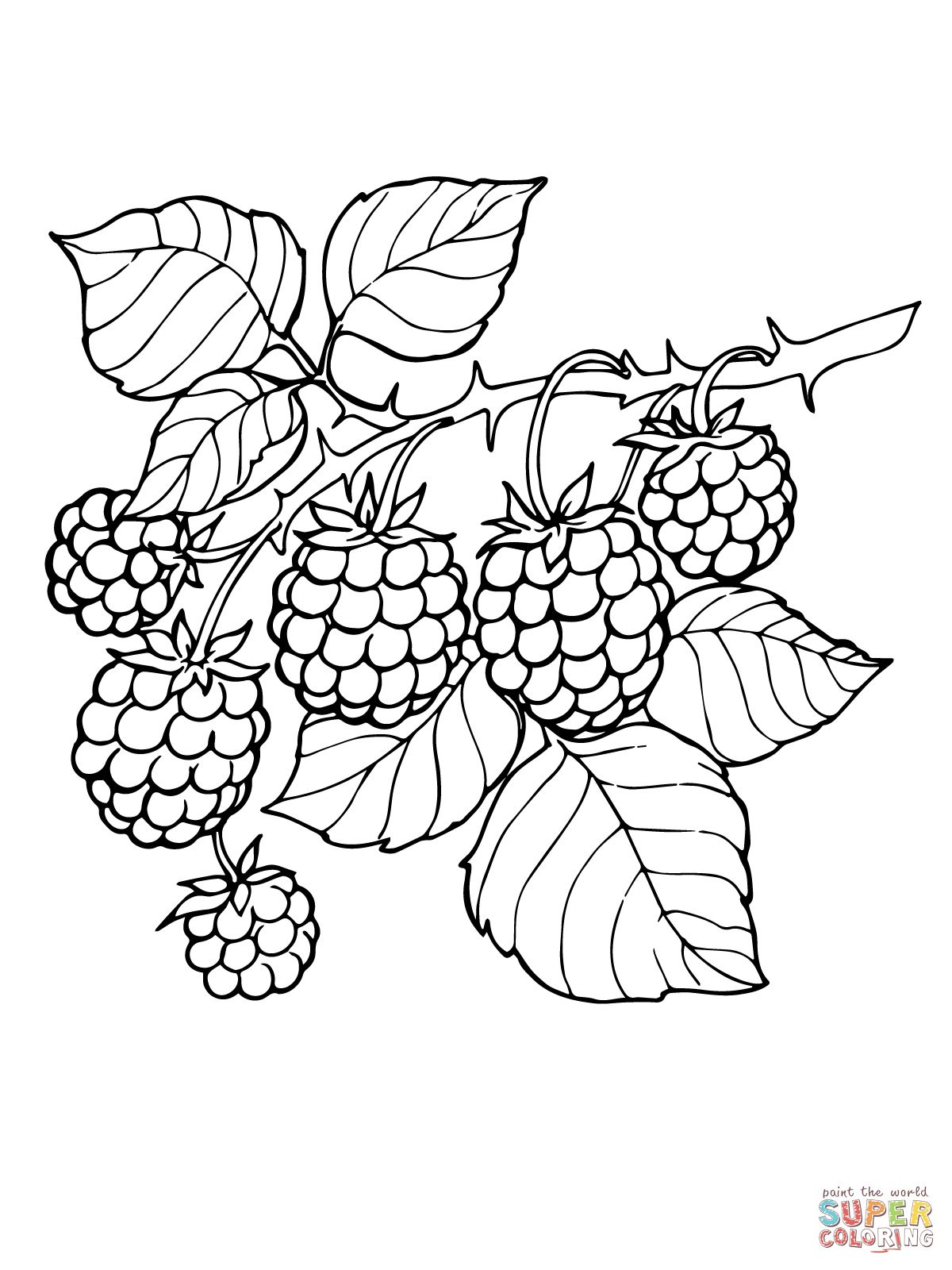Blackberry Branch Super Coloring With Images Fruit Coloring