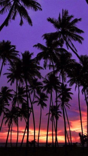wallpaper Palm trees wallpaper, Sunset wallpaper, Sky