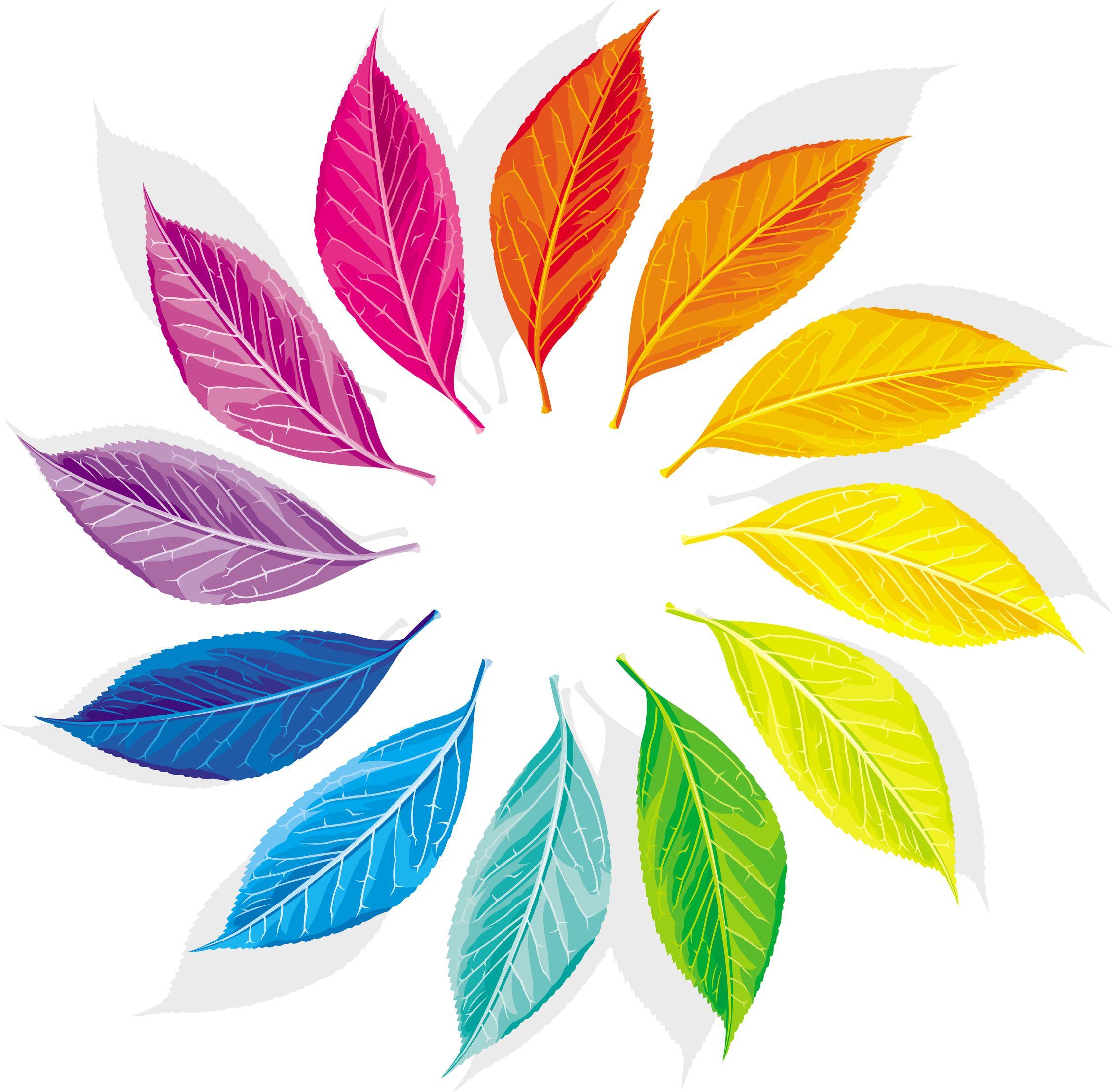 Color wheel as a dozen multi-colored leaves Stock Photo - 9931408 Colour  Wheel Ideas