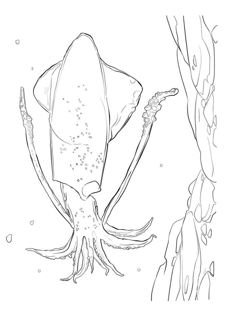 Minecraft Squid Coloring Pages Squid Is A Type Of Aquatic Animal With Tentacles And Has No Verteb Animal Coloring Pages Coloring Pages Coloring Pages To Print