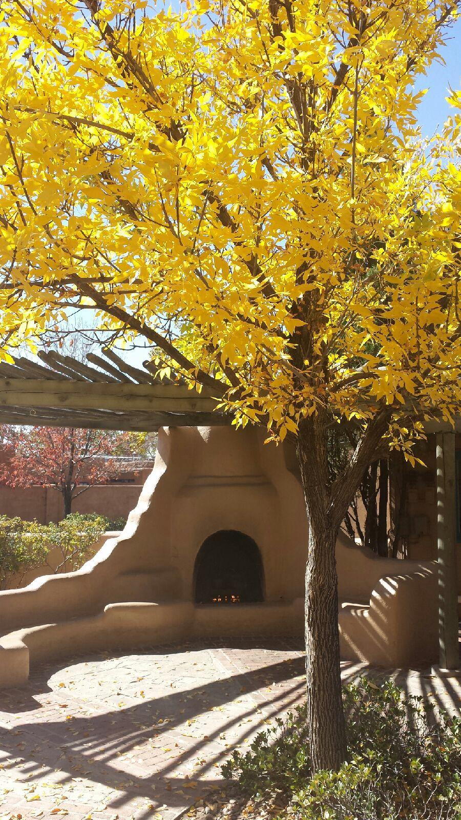 Outdoor Oven And Abobe Lounge Albuquerque New Mexico