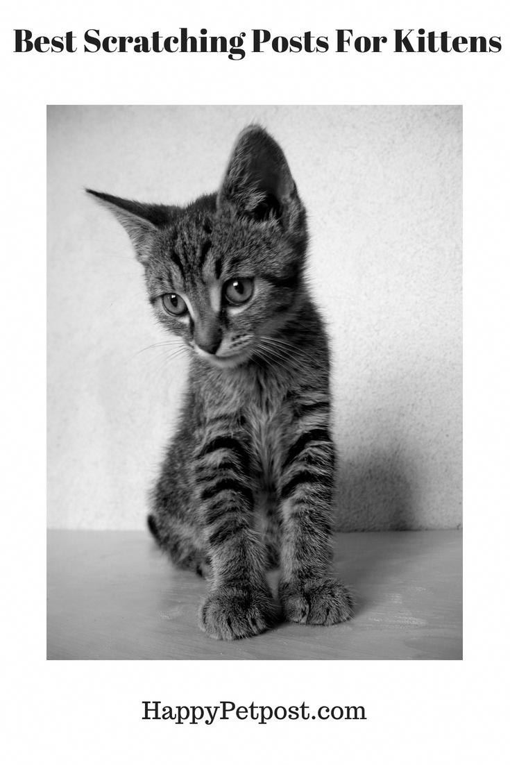 Catsweb Tidycatscoupon Refferal 6441253343 Scratchingpostforcats Best Cat Scratching Post Cat Scratching Post Kittens