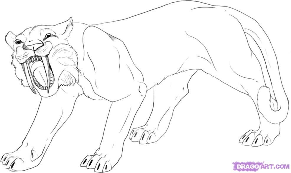 How To Draw A Saber Tooth Tiger Step 5 Jpg 987 588 Sabertooth