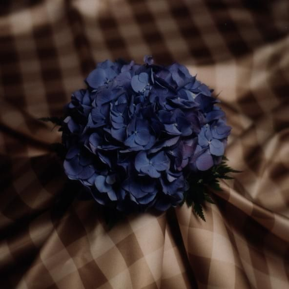 Blue Hydrangea Photo by Julie Eliyas - Studio 925